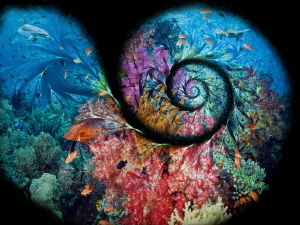 The spiral of the sea by Alex Varani