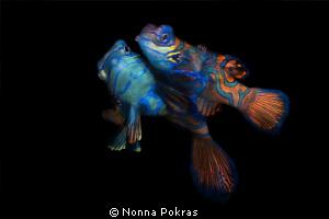 Couple by Nonna Pokras