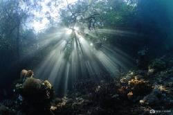 Rays rays rays by Nadya Kulagina