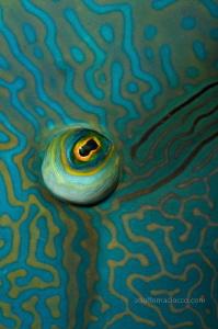 Napoleon eye by Adolfo Maciocco