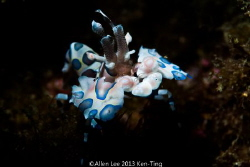 Harlequin Crab by snoot. by Allen Lee
