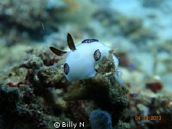 just another Jorunna Funebris by Billy N