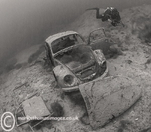Water Beetle. Capernwray. by Mark Thomas