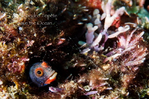 Little Shy, Acapulco Mexico by Alejandro Topete