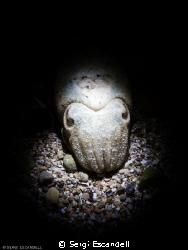 Night Face by Sergi Escandell
