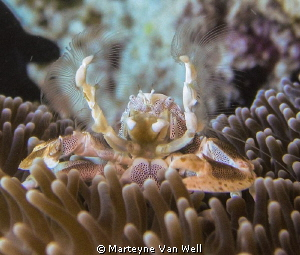Beautiful little crab almost posing for the camera by Marteyne Van Well