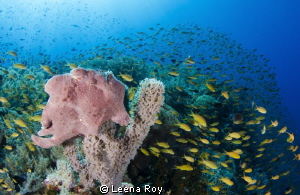 Frogfish waiting for lunch by Leena Roy