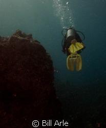 Dive leader.  Kohala Divers. by Bill Arle