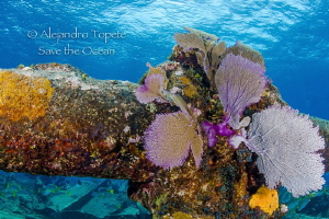 Ginger Sole, Chinchorro  Mexico by Alejandro Topete