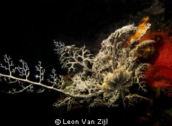 Shot in Hermanus, South Africa. Hakskeen reef by Leon Van Zijl