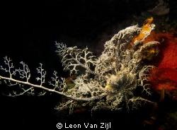 Shot in Hermanus, South Africa. Hakskeen reef by Leon Van Zijl