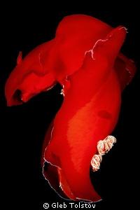 Dancing in the dark by Gleb Tolstov