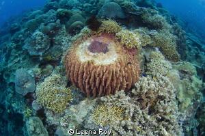 Barrel sponge by Leena Roy