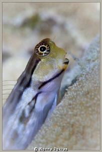 Cute fish by Nonna Pokras