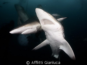 sharks in the dark by Afflitti Gianluca