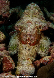 Underwater Bearded Man? by Munawir Muslim