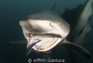gnamm.. by Afflitti Gianluca
