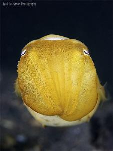 Cuttlefish by Iyad Suleyman
