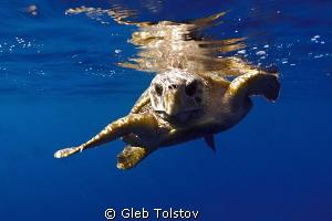 A turtle by Gleb Tolstov