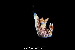 free falling nembrotha by Marco Fierli