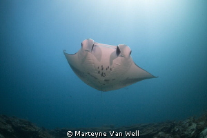 Manta Ray passing by by Marteyne Van Well