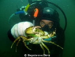 This crab was about 10cm with all it's legs only! It was ... by Blagodarova Elena