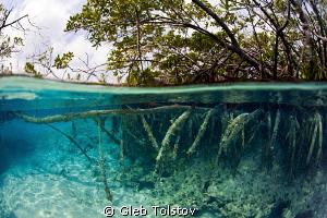 Mangrove by Gleb Tolstov