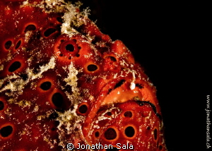 froggy profile by Jonathan Sala