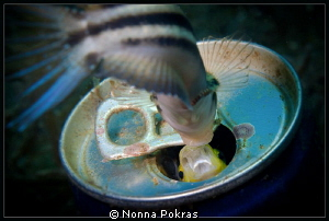 fighting by Nonna Pokras