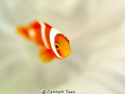 [Nemo with White] by Kenneth Tsao