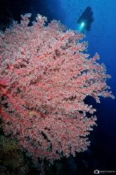 soft corals by Nadya Kulagina