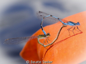 Dragon fly - Wedding on my lifewest during kayaking the S... by Beate Seiler