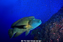 this Picture was taken in the red sea at Big Brother. by Michael Weberberger