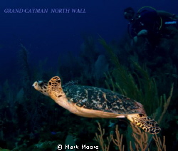 North wall Grand Cayman by Mark Moore