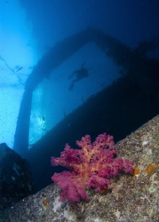 Coral growing on the wreck of The Giannis D in the Red Sea by Graham Watters