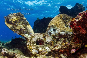 Ginger Sole 1, Chinchorro Mexico by Alejandro Topete