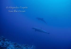Dolphins, Isla de Coco Costa Rica by Alejandro Topete
