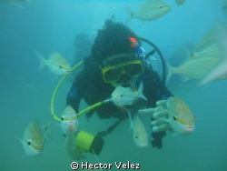 My younger son, diving among the fish by Hector Velez