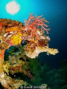 Beautiful marine growth on shipwreck in Truk Lagoon by David Gilchrist