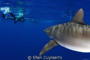 A shark's view by Ellen Cuylaerts