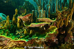 Sponges. by Todd Moseley