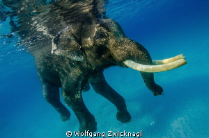 Well, Rajan again. As there is no category for swimming m... by Wolfgang Zwicknagl