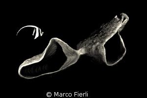 the Banner & the Sponge by Marco Fierli