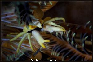 yellow eyes by Nonna Pokras
