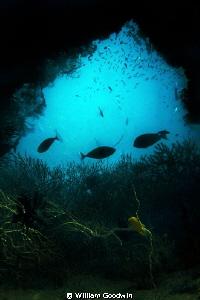 Eye of the Needle... Beqa lagoon, Fiji by William Goodwin