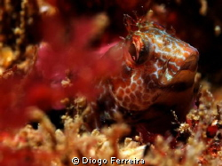 """""""I see you hiding in the bushes..."""" XZ1 with flash, uncroped by Diogo Ferreira"""