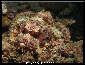 Poisson scorpion diable by André Bruchez