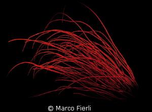 Elisella by Marco Fierli
