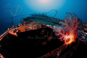 RED LIGHT A colourful view of the bow of the sunken Prin... by Mona Dienhart