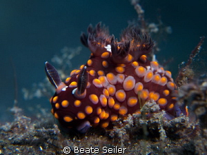 strawberry nudi by Beate Seiler